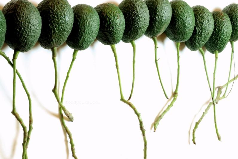10 23 15 avocado stems (23a) FP