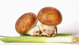 Twin Mushroom