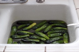 Floating Cucumbers