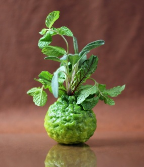 Kafir Lime Vase